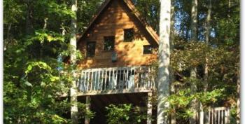 Trees framing Mountain Rose Cabin