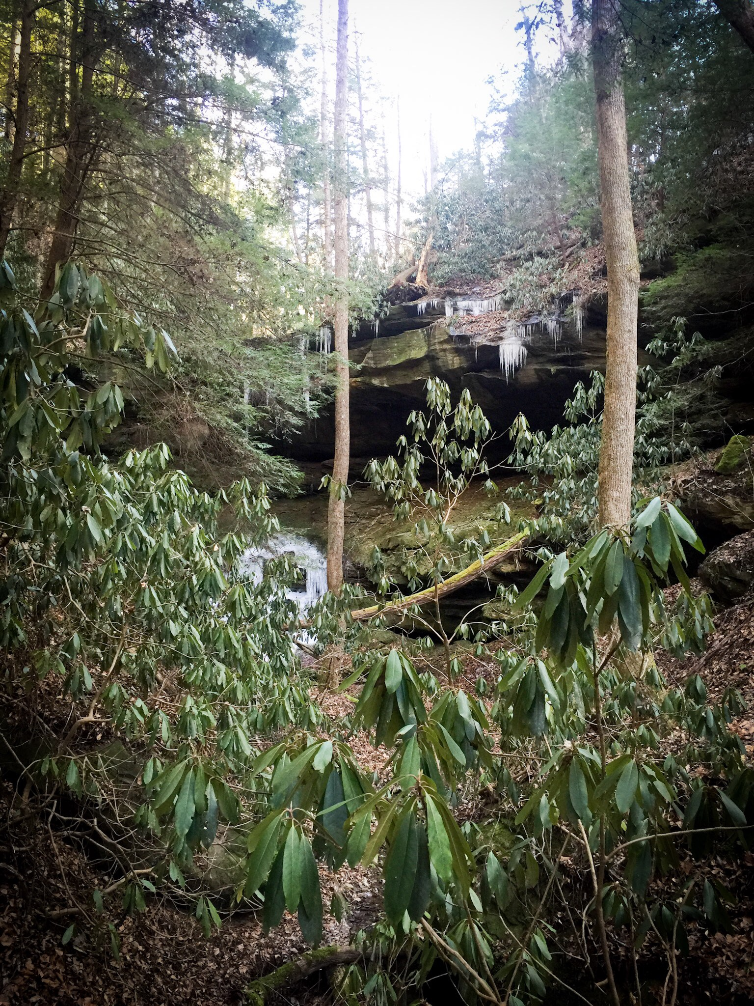 red river gorge winter woods