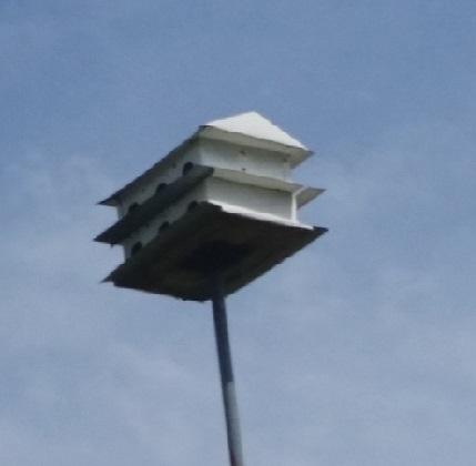 birdhouse invites beautiful native birds in