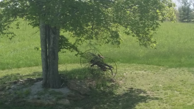 old fashioned plow under lush green tree
