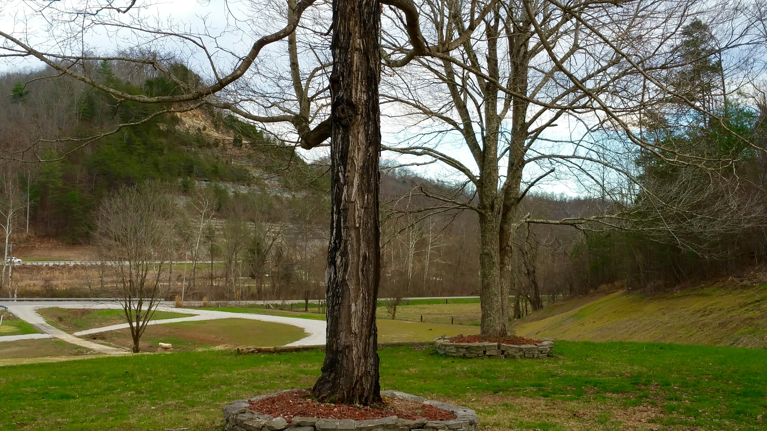 protection method of daniel bone forest