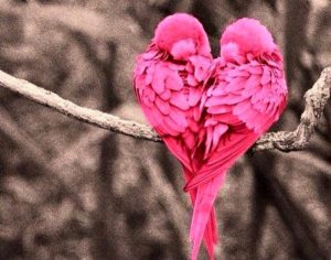 love-birds-happy-friday